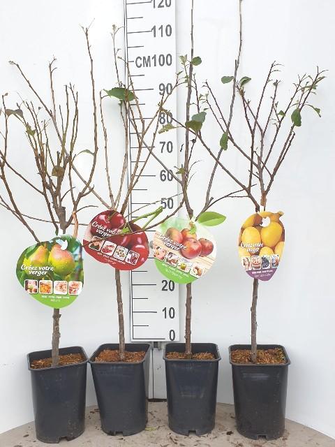les fruitiers les petits fruits
