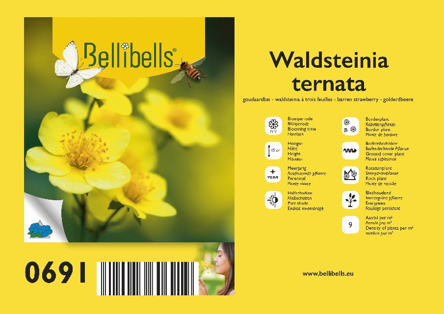 Waldsteinia