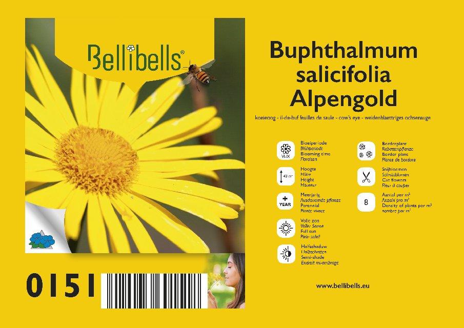 Buphtalmum