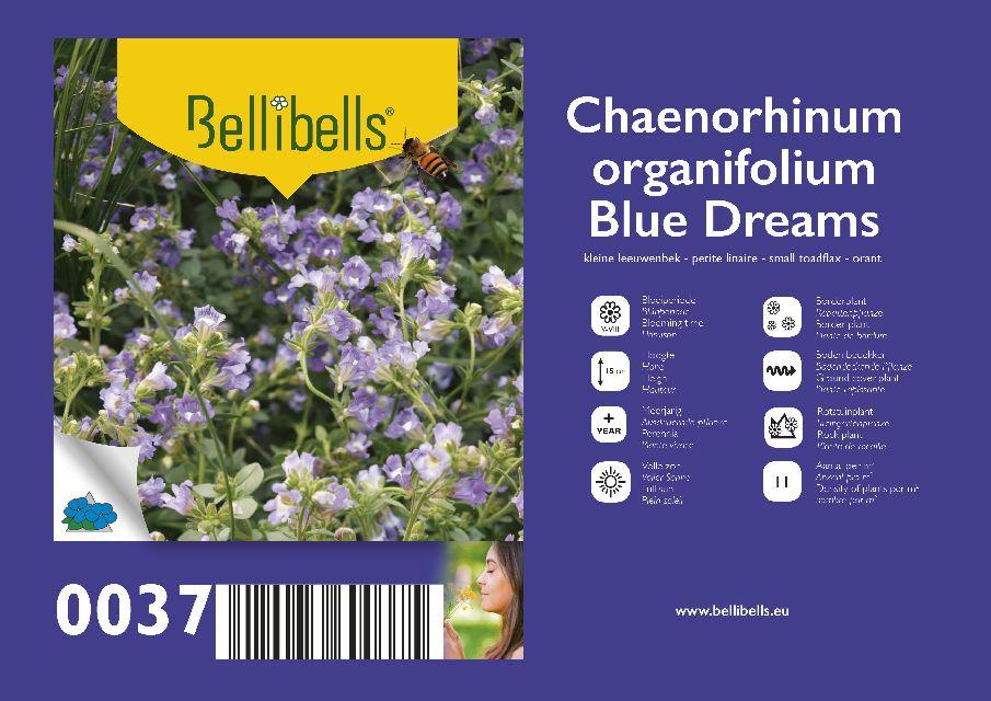 Chaenorhinum
