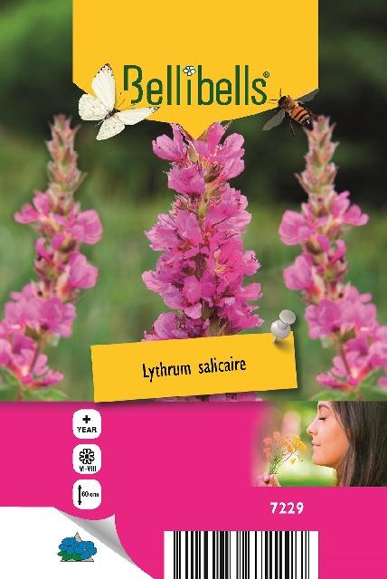 Lythrum