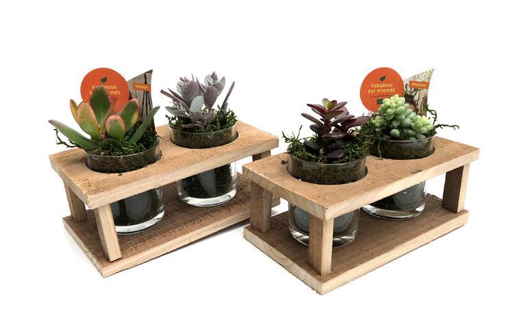 Succulentes compose