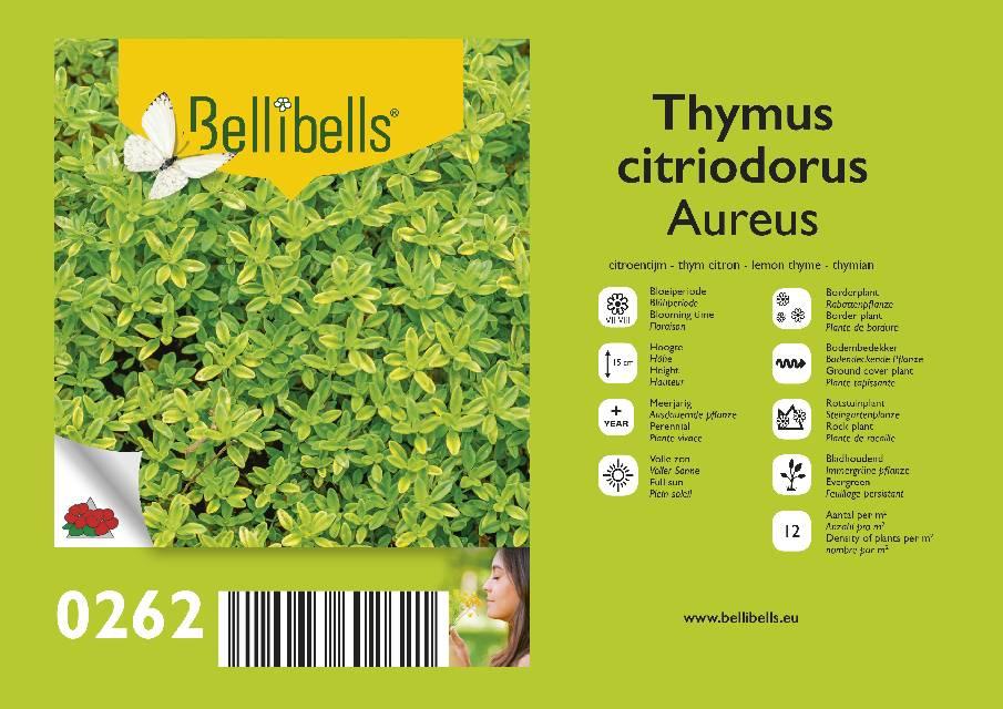 thym - thymus
