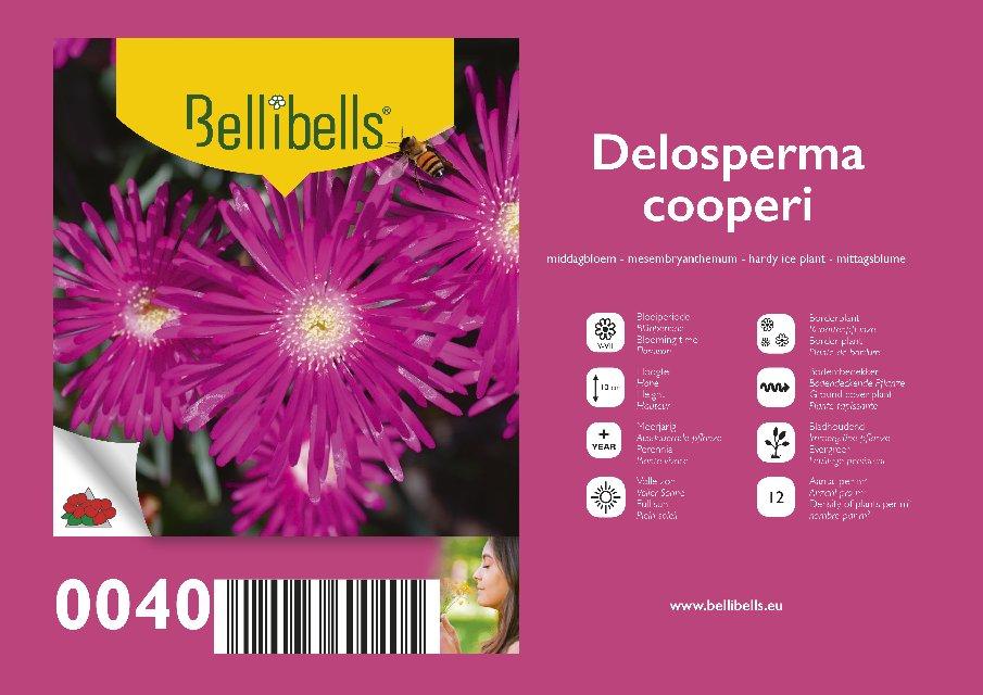 Delosperma