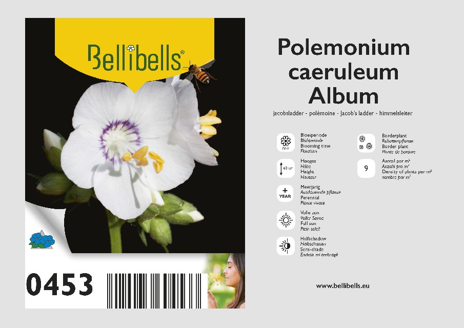 Polemonium
