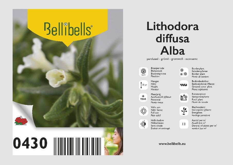 Lithodora