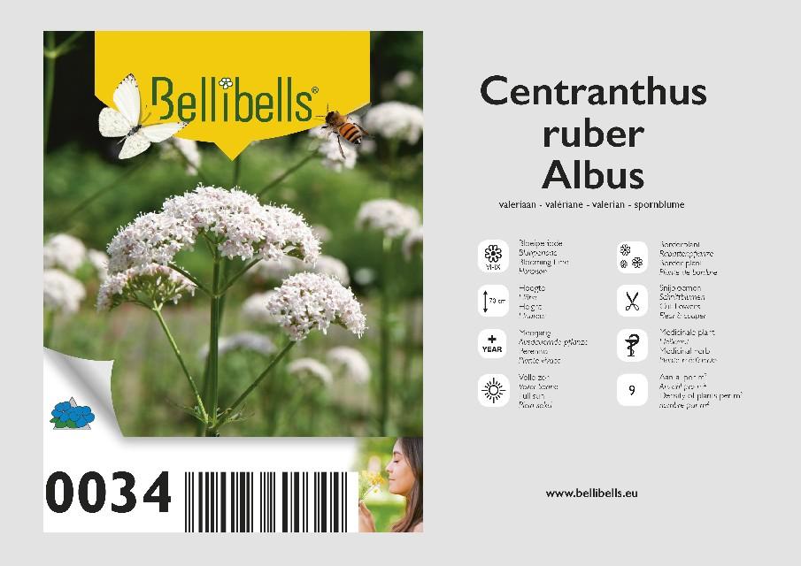 Centranthus