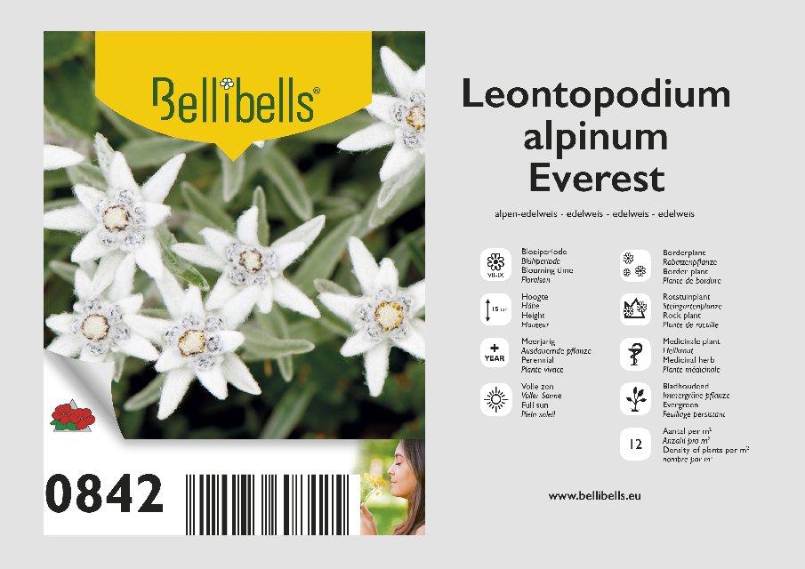 Leontopodium